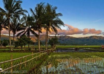 Landscape near Tondano